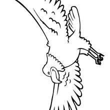 A águia-careca, o símbolo dos Estados Unidos