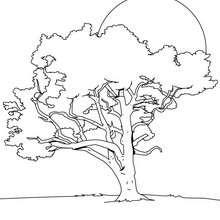 Desenho de um Limoeiro para colorir