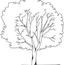 Desenho de uma bela árvore para colorir