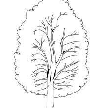 Desenho de uma álamo para colorir