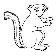 Desenho de um esquilo para colorir