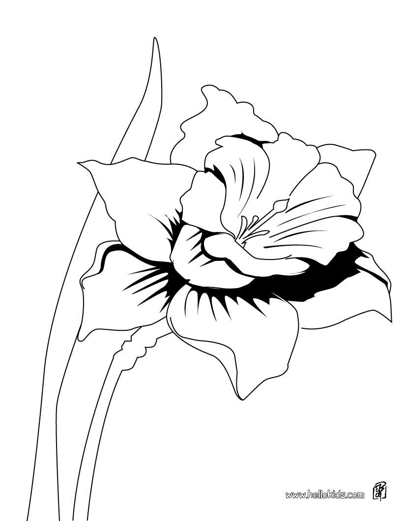 Desenhos para colorir de desenho de uma bela orquídea para colorir ...