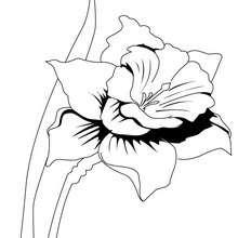 Colorindo flores : Narciso