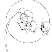 Desenho de uma bela orquídea  para colorir
