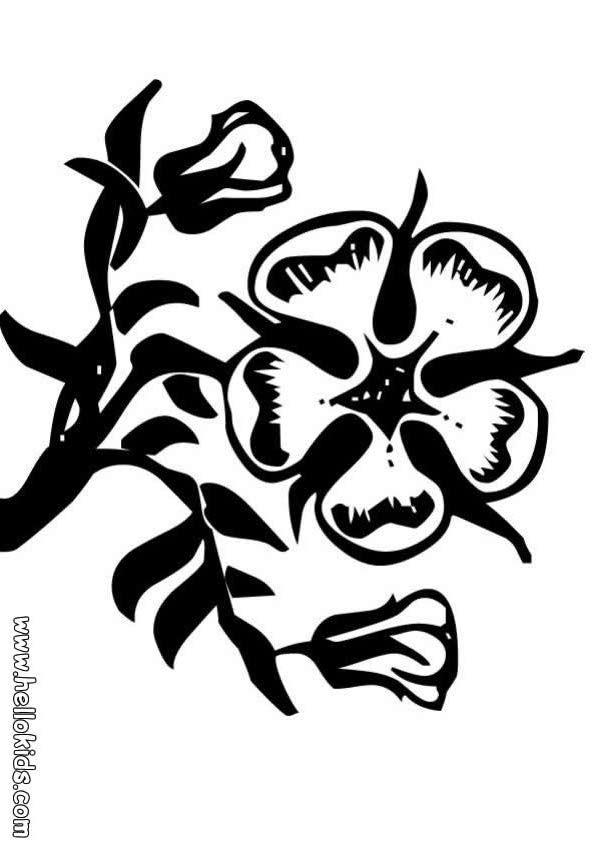 desenhos para colorir de desenho de um vaso com flores para colorir