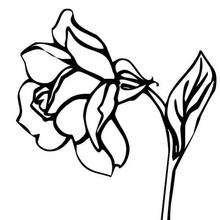 Desenho de flores rosas para colorir