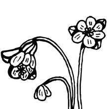 Desenho da flor primavera para colorir