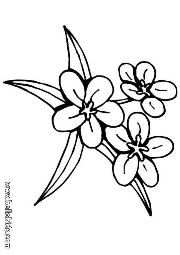 Desenho de três flores para colorir