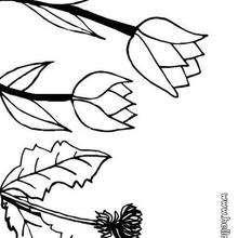 Desenho de uma Tulipa para colorir
