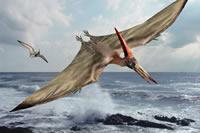 Como desenhar um Pteranodonte