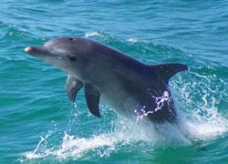 Como desenhar um lindo golfinho livre.