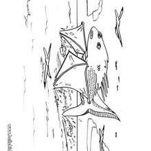 Desenho de um enorme peixe mostro para colorir