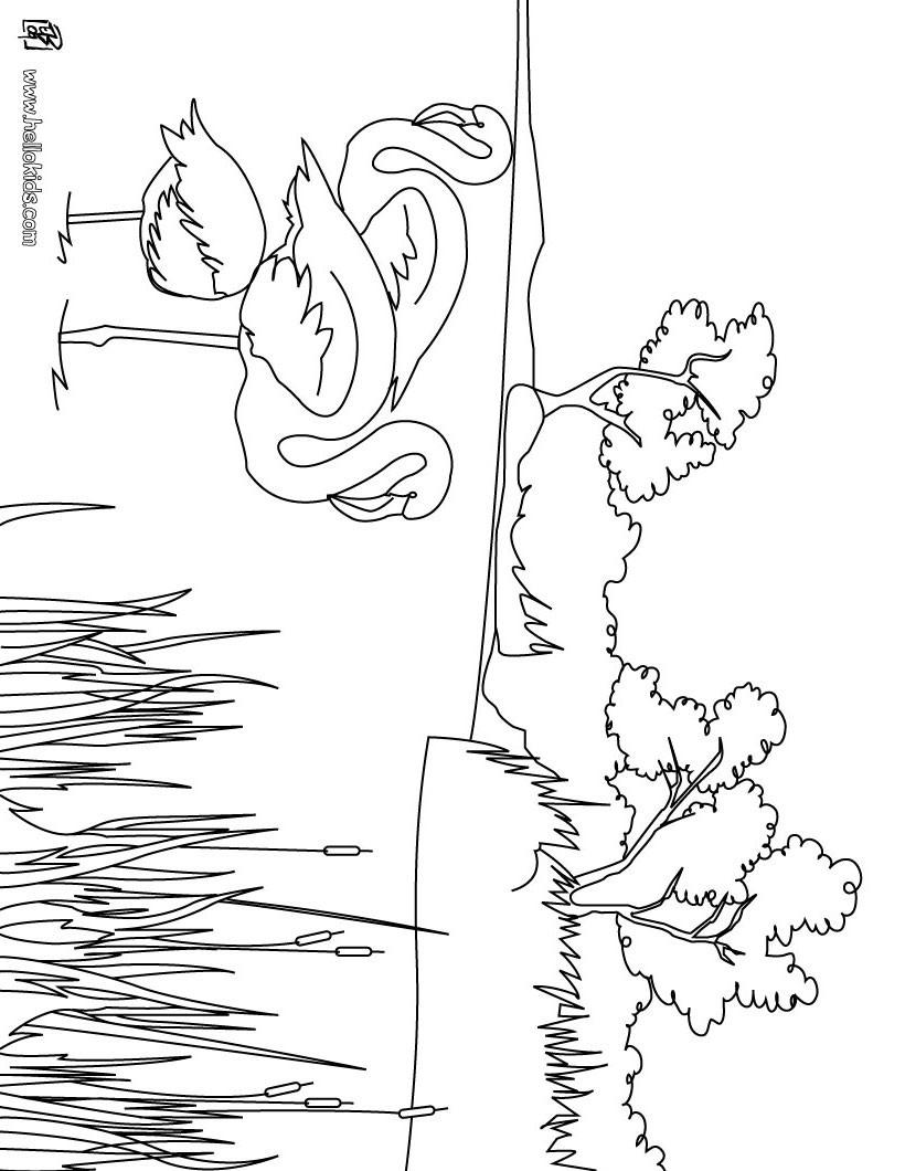 Desenhos Para Colorir De Desenho De Flamingos Na Natureza