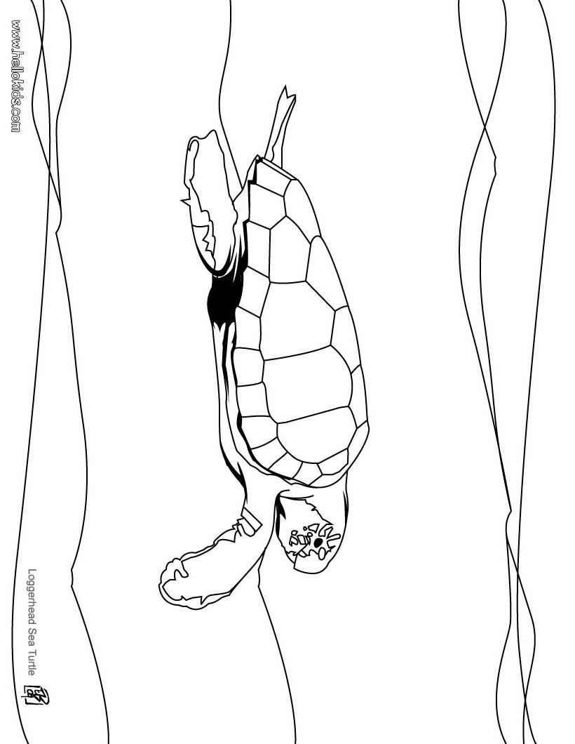 Desenho de uma tartaruga marinha para colorir