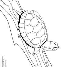 Desenho de uma Tartaruga-do-ouvido-vermelho no tronco para colorir
