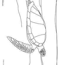 Desenho de uma tartaruga verde nadando para colorir