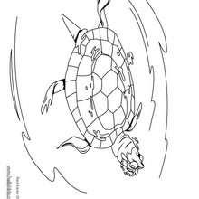 Desenho de uma Tartaruga-do-ouvido-vermelho para colorir