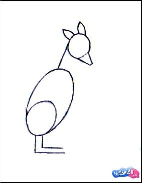 Como desenhar um Canguru