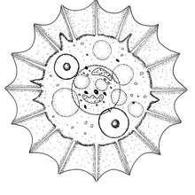 Mandala com conchas