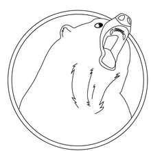 Desenho de um urso preto Americano para colorir