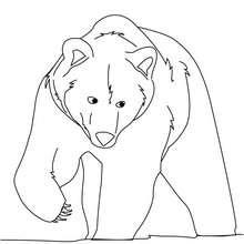 Desenho de um urso-pardo para colorir online