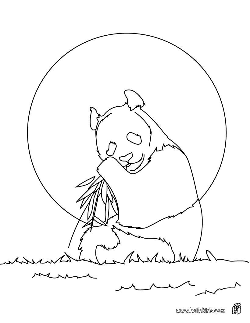 páginas para colorir animais selvagens desenhos para colorir