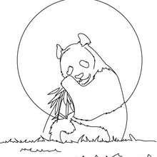 Desenho de um Panda gigante para colorir