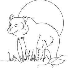 Desenho de um Urso-cinzento para colorir