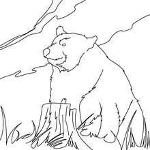 Desenho de um Urso-de-kodiak para colorir