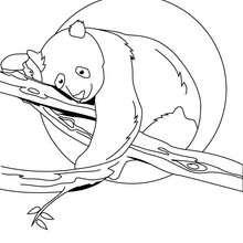 Desenho de um Panda em um galho para colorir