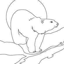 Urso polar para imprimir