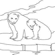 Desenho de um urso polar para colorir online