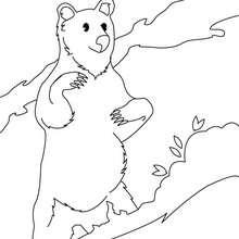 Desenho de um Urso-malaio para colorir