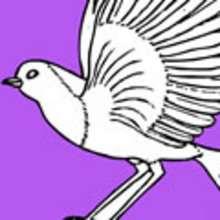pássaro, Páginas para colorir PASSARINHOS