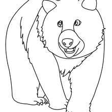 Desenho de um Ursão para colorir