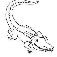 Desenho de um Jacaré para colorir