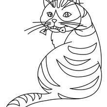 Desenho de um gatinho comendo um peixe para colorir