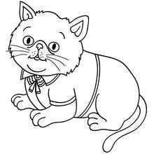Desenho de um gato elegante para colorir