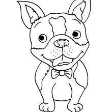 Desenho para colorir de um Cão sorrindo