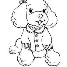 Desenho para colorir de um Poodle