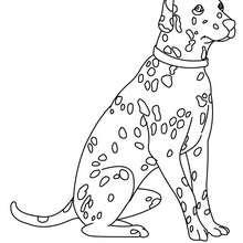 Desenho para colorir de um Dálmata