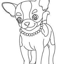 Desenho para colorir de um Chihuahua