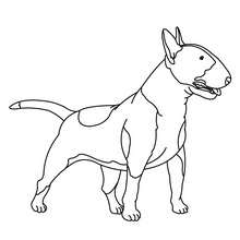 Desenho para colorir de um Bull Terrier