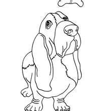 Desenho para colorir de um Bassê
