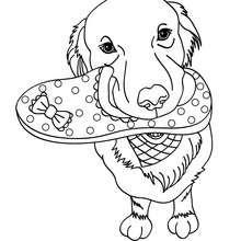 Desenho de um Labrador para colorir