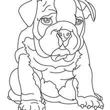 Desenho de um Bulldogue para colorir