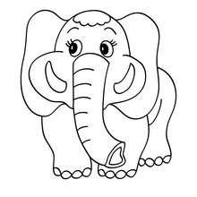 Um elefante para colorir
