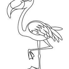 Um lindo Flamingo para colorir