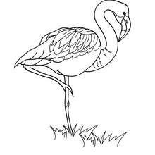 Imagem de um Flamingo para colorir