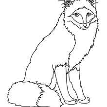 Uma raposa para colorir